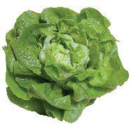 insalata lattuga al cesto
