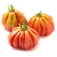 pomodori canestrini   al pz