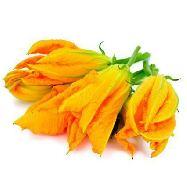 fiori di zucca confezionati gr.100