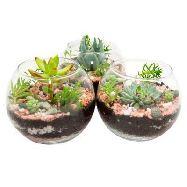 composizione piante miste vetro d.9 h45